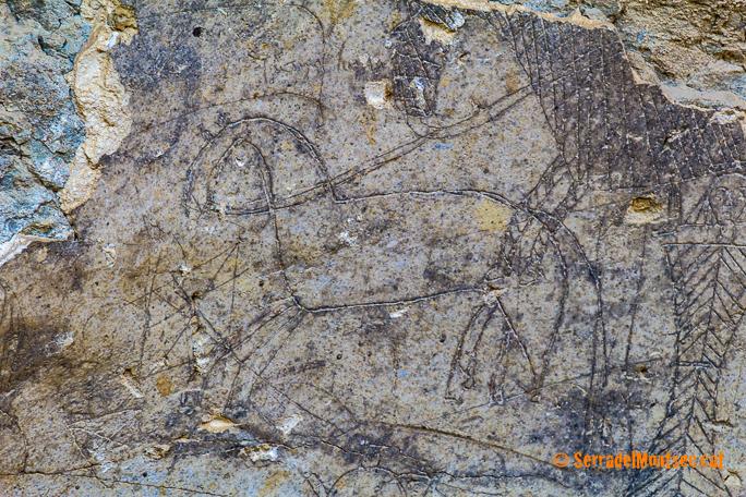 Representació d'un cavall a les restes de guix del Castell d'Oroners. Camarasa, La Noguera. Lleida, Catalunya. Montsec d'Ares.