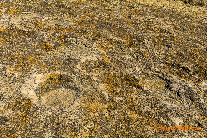 Petjades de dinosaure al Jaciment Paleontològic d'Icnites (Petjades de Dinosaures) del Doll, Camarasa. La Noguera, Lleida. Catalunya. Montsec de Rúbies.