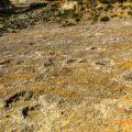 Jaciment Paleontològic d'Icnites (Petjades de Dinosaures) de La Maçana, Camarasa. La Noguera, Lleida. Catalunya. Montsec de Rúbies.
