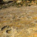 Jaciment d'Icnites de la Maçana, Camarasa.